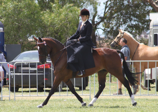 Stacey on her own 'Tribal Dynasty' at Melbourne Royal Horse Show