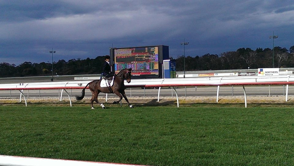 Stacey on her own 'Tribal Dynasty' cantering down the home straight of Kilmore Race Track.
