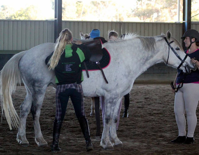 Stacey saddle fitting Cassies horse Stella at a side saddle clinic.