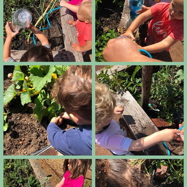 Gardening in our yard