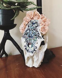 Decorated deer skull