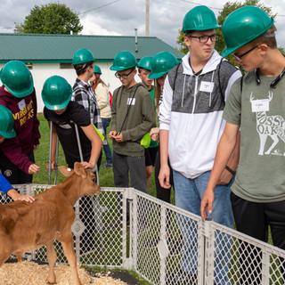 Students Petting Newborn Calf