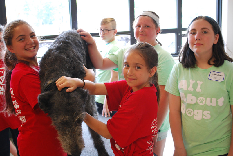 All About Dogs Camp