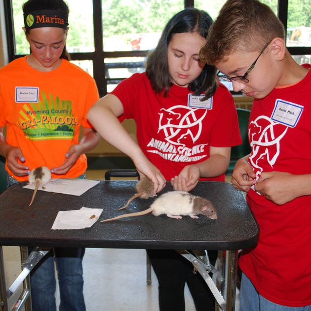 Animal Science/Vet Camp - Unusual Pet Day