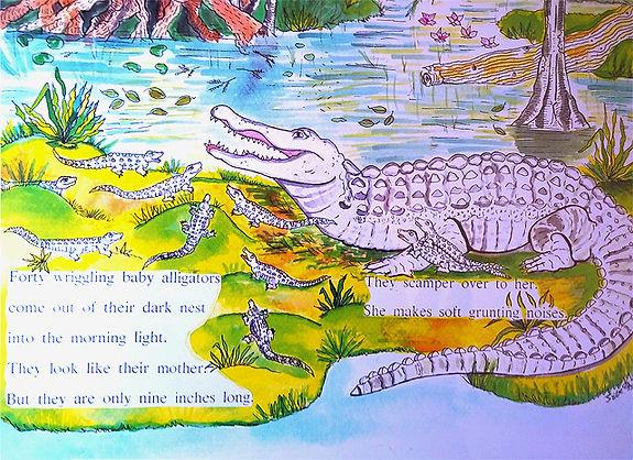 Alligator%20HSC_edited.jpg