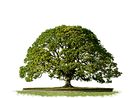top-tree-png-4138.png