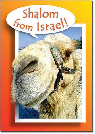 Camel - Shalom from Jerusalem