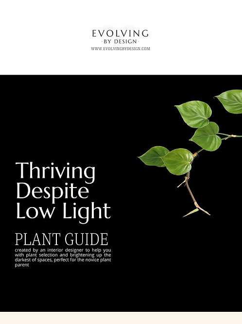Thriving Despite Low Light Plant Guide