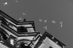 La cathédrale (LSN)