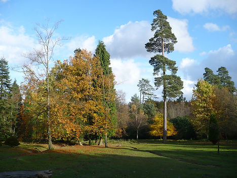 trees at Tilgate Park