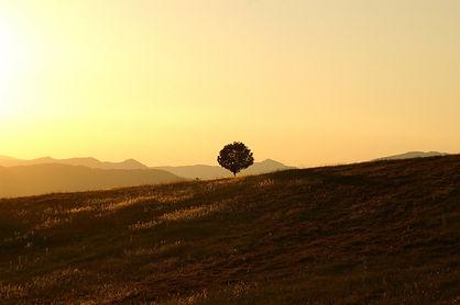 tree-189852_1920.jpg