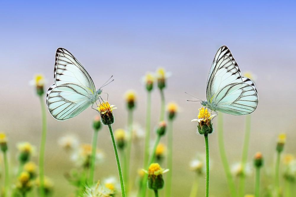 Trau Dich in Deinen Kokon! Du bist ein wunderschöner Schmetterling!