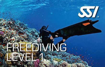 Anemone SSI Freediving Level 1
