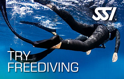 Anemone Try Freediving