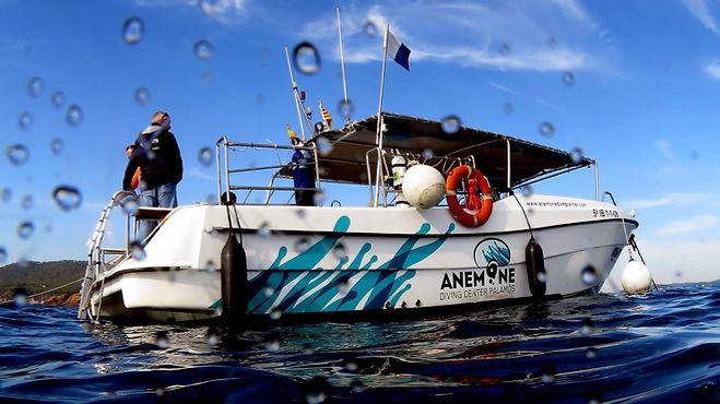 Barco Anemone
