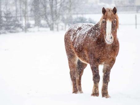 Friday Fun Facts! Snowy Horses