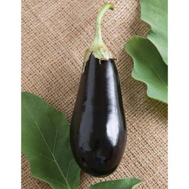 Eggplant - traviata