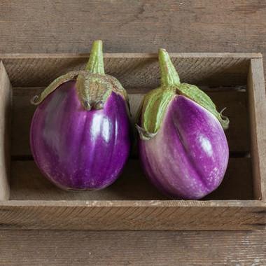 Eggplant - Rosa Bianca