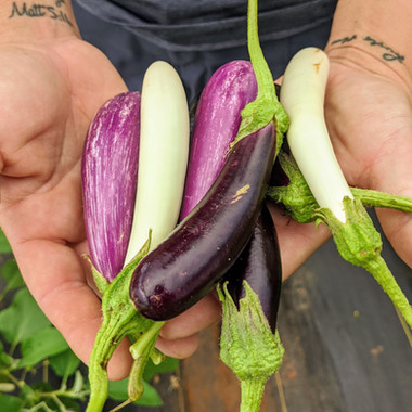 FairyTale Mini Eggplant Mix