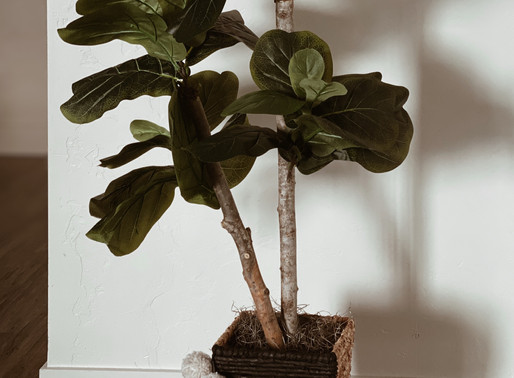 AFFORDABLE FIDDLE LEAF TREE