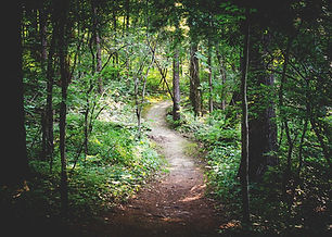 forest-path-1081805_960_720.jpg
