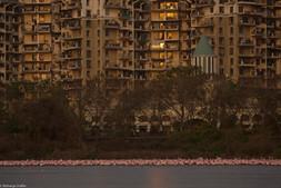 Flamingoes_aishwarya sridhar