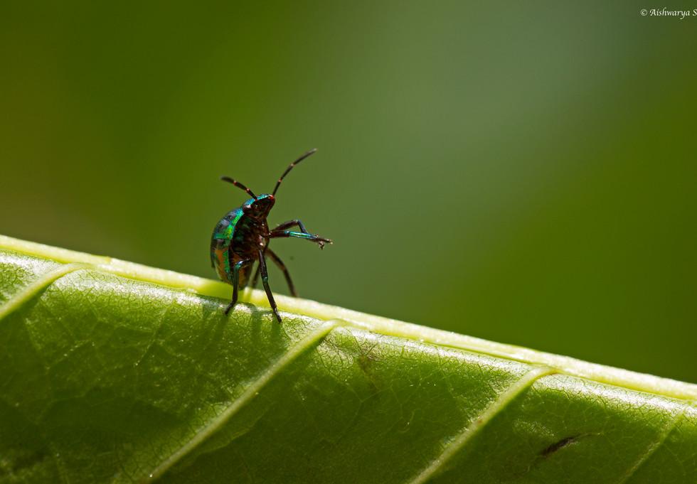 beetle_2820.jpg