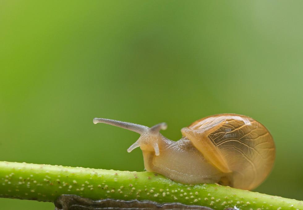 snail_4111.jpg