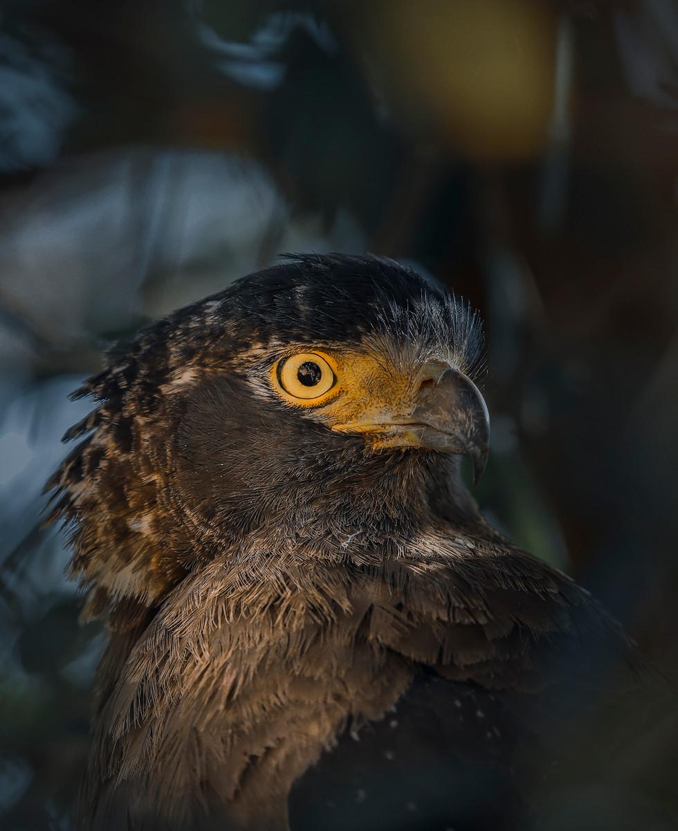 Serpant Eagle-edited-0001.jpg