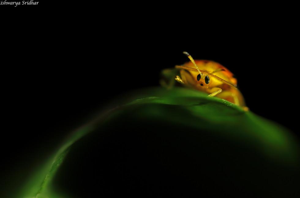 orangel beetle_3368.jpg