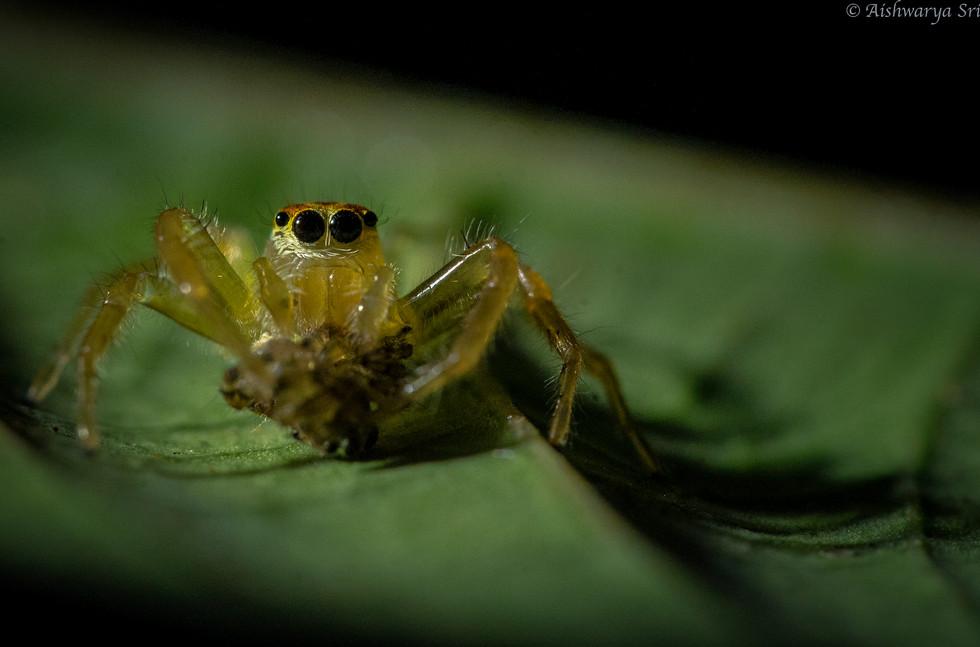 Spider_1_-1027.jpg