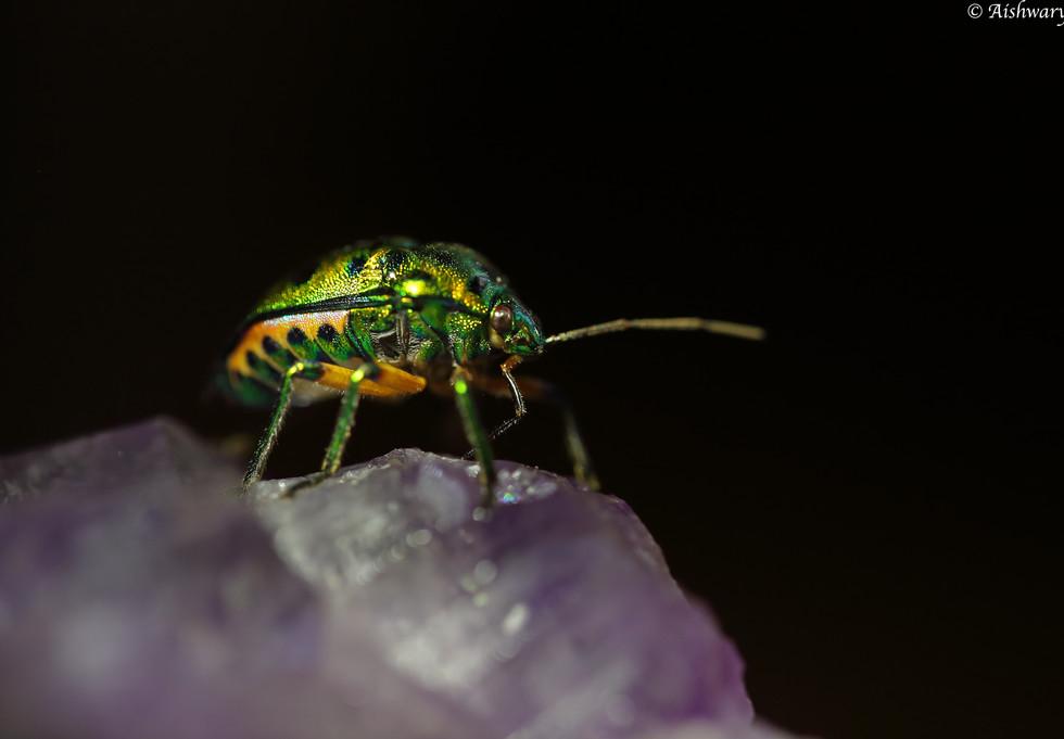 beetle_0204.jpg