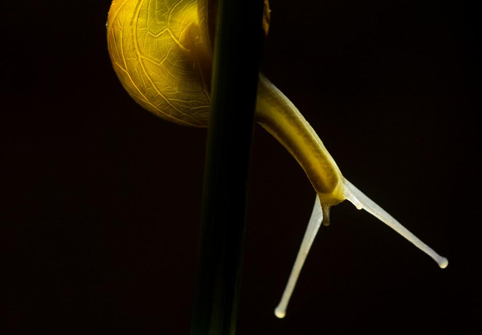 snail_2914.jpg