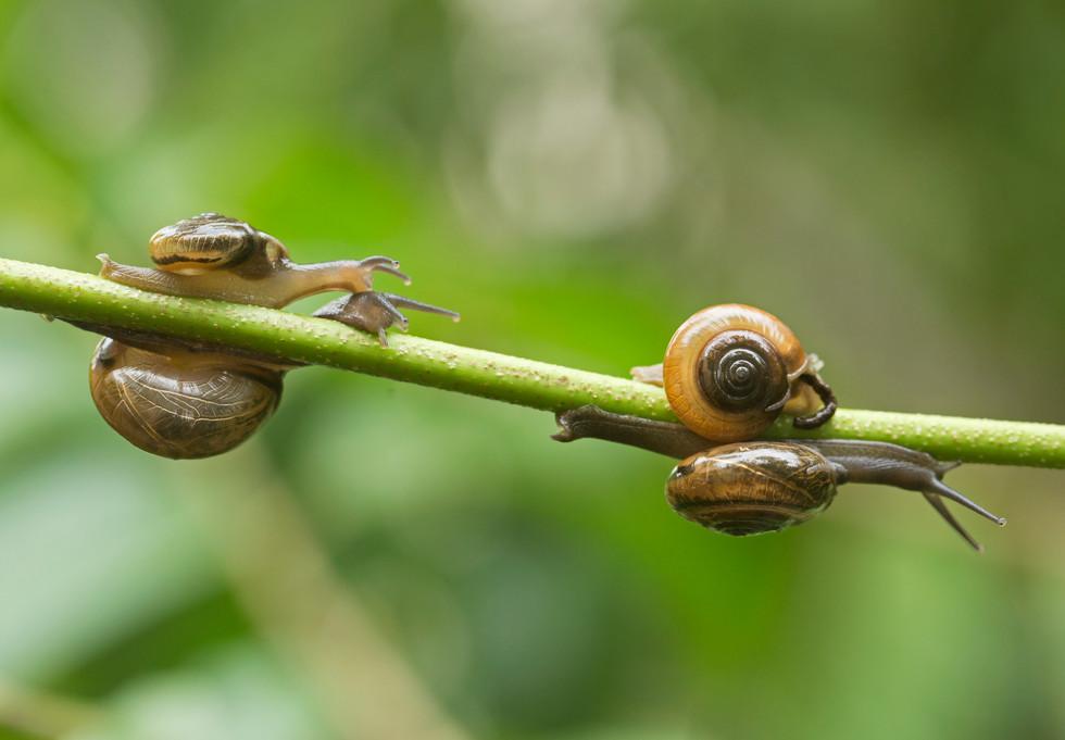 snail (DCPOTY)_4060.jpg