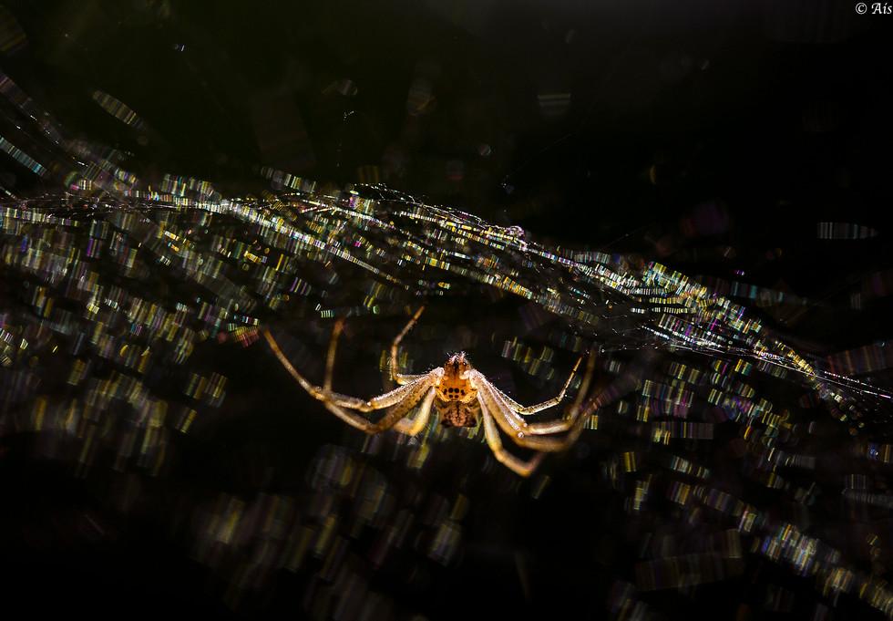 Spider 2_8399.jpeg