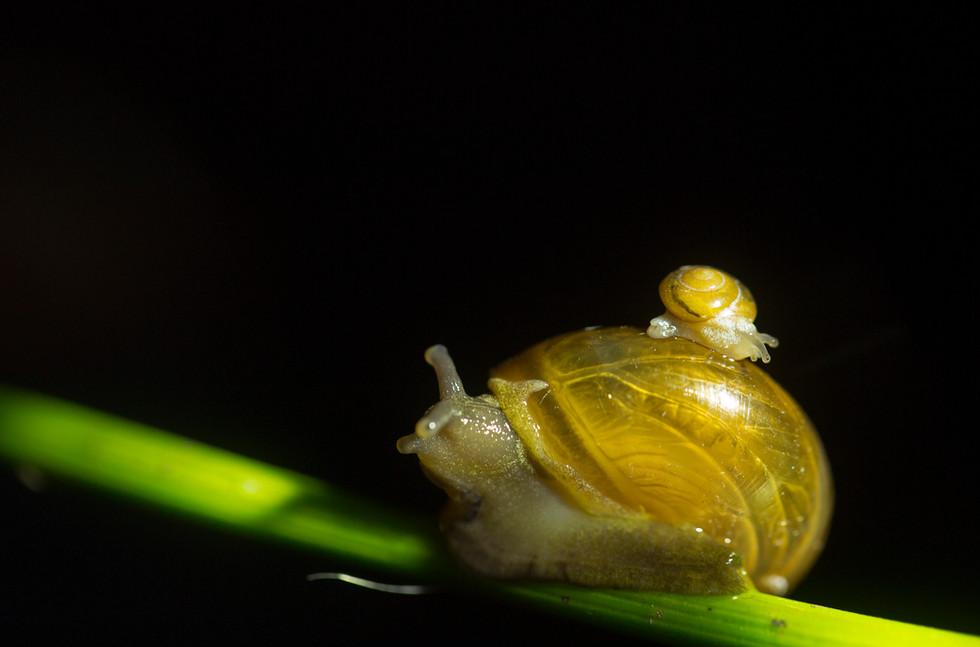 snail_3204 copy.jpg