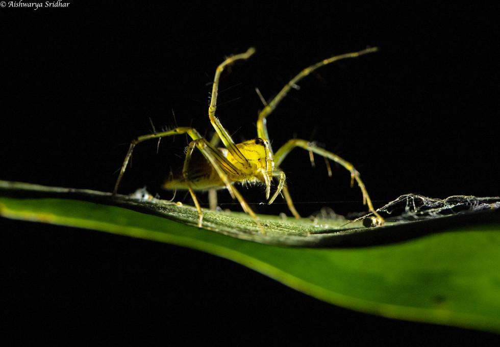 Spider_1755.jpg