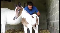 osteopathe animalier chevaux