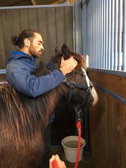 osteopathe chevaux poissy