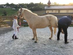 osteopathe chevaux mantes la jolie