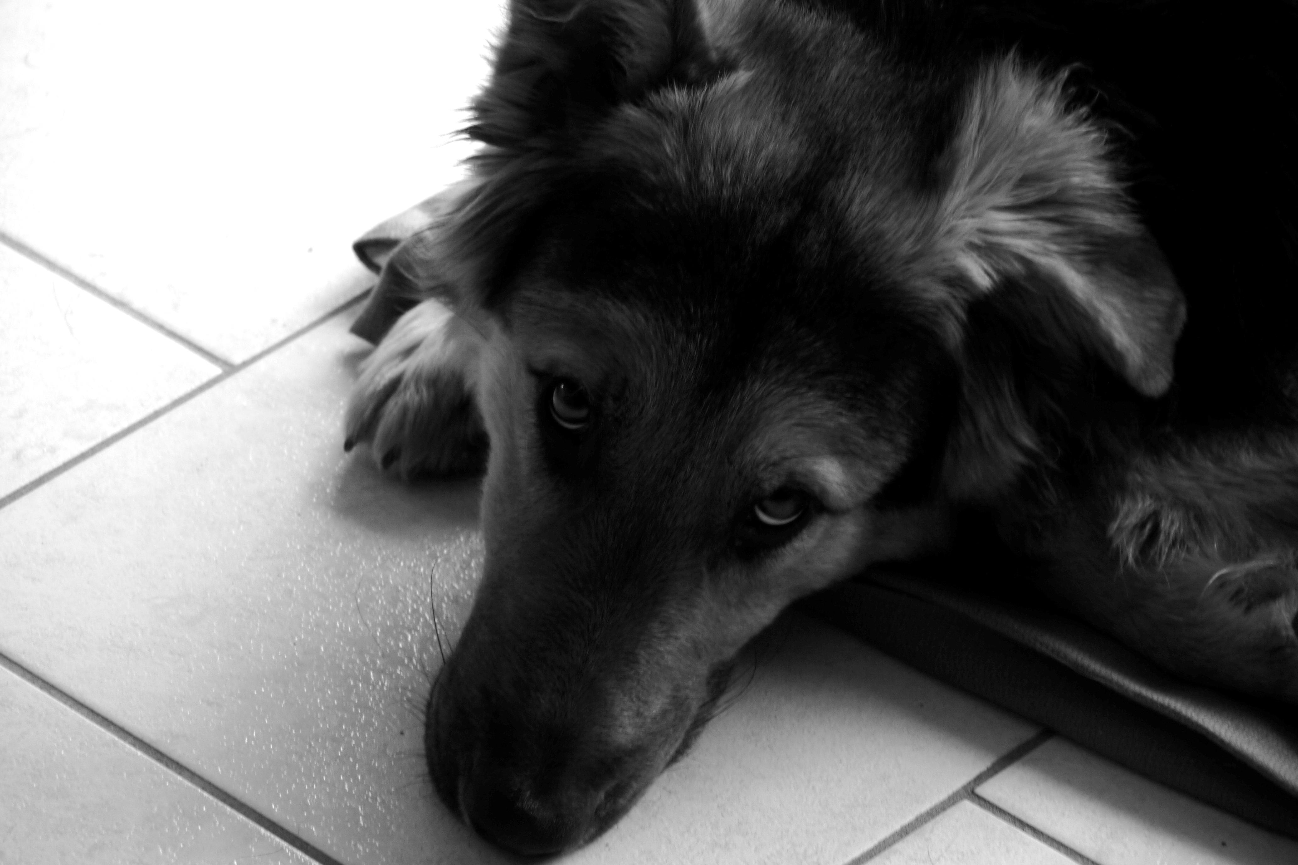 osteopathe animalier chien