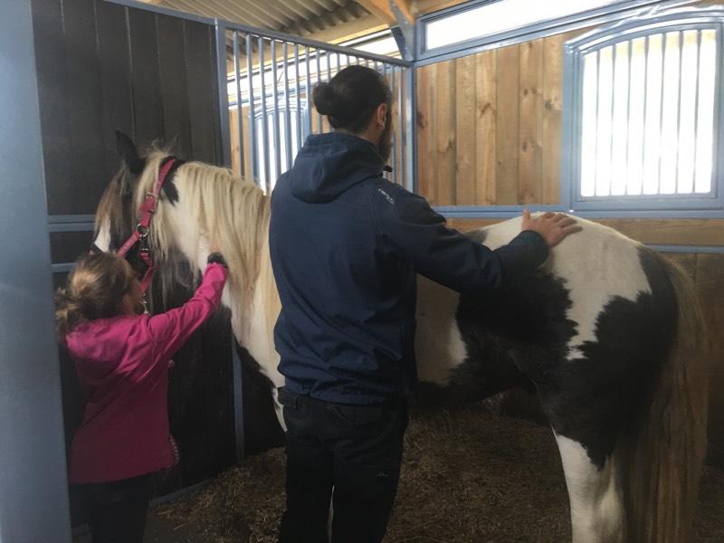 osteopathe chevaux versaille