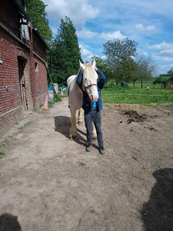 osteopathe chevaux yvetot