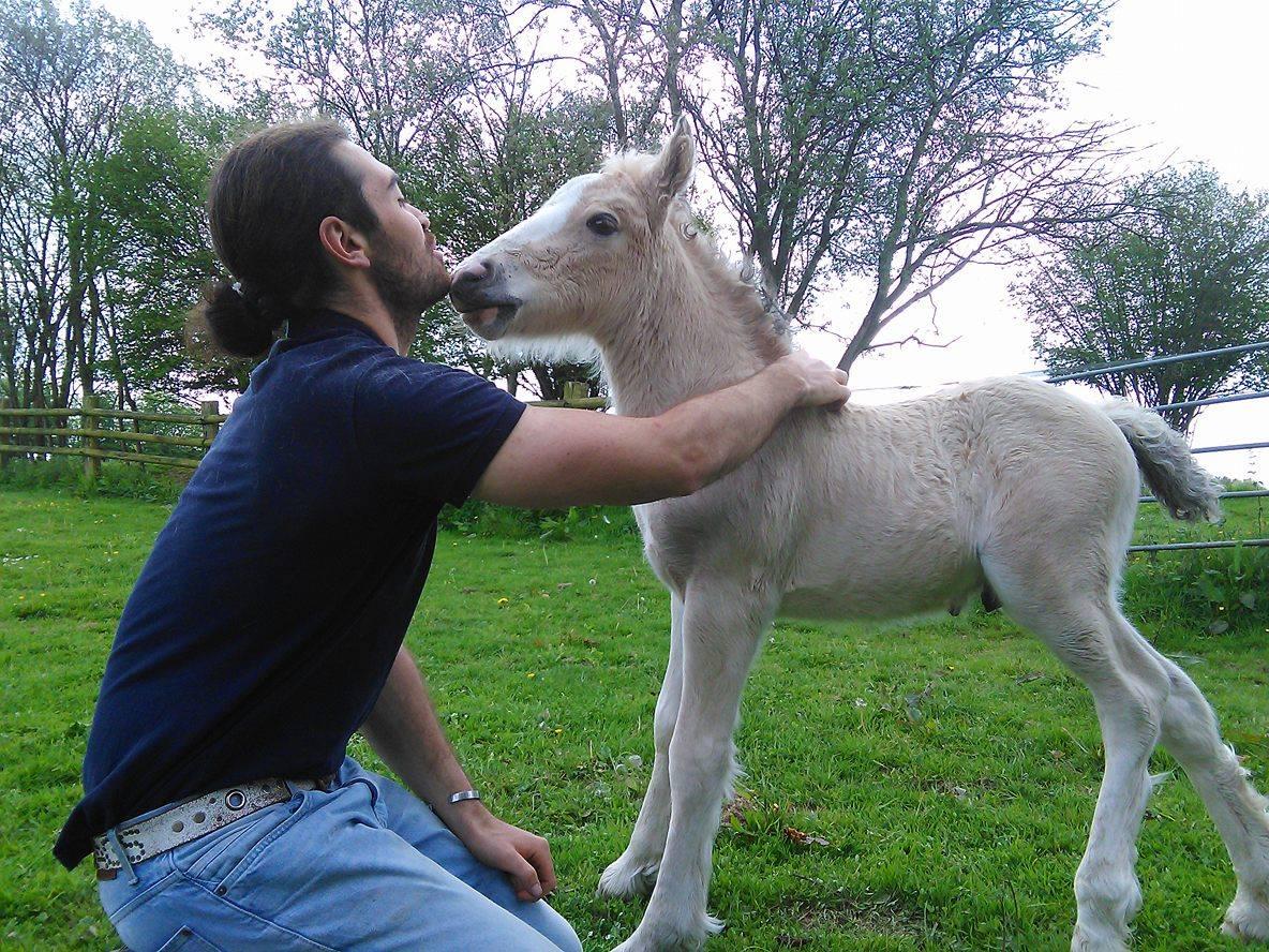 osteopathe animalier evreux