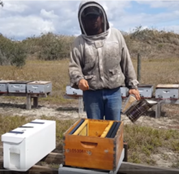 Top 10 Nuc Tips for new bees