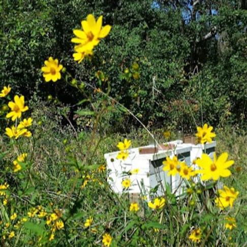 September meeting of Apalachee Beekeepers