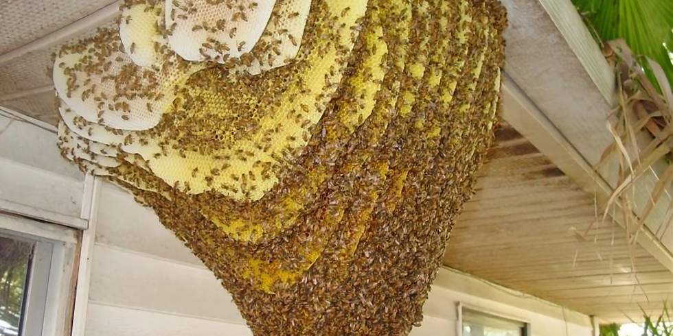 July 13 2021 Meeting - Open Hives and Meeting