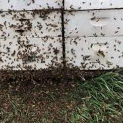 August meeting of Apalachee Beekeepers