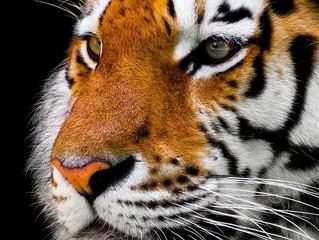 "Considering Litigation: ""Tiger King"" Holds Important Lesson"