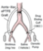 Baboon Aorto-iliac ePTFE Graft copy crop